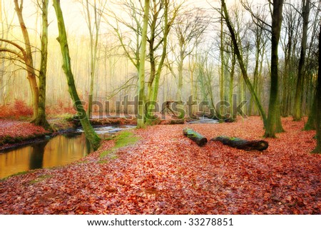The forest in fall - with sunrise and morning fog - stock photo