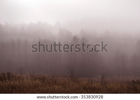 The forest in the morning fog in pastel pink colors. A winter dawn over the forest. - stock photo