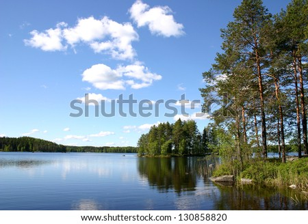 the forest lake surrounded with pines