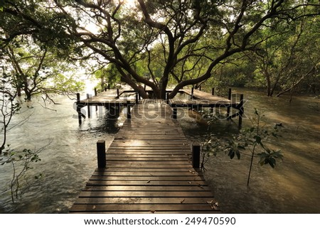 The forest mangrove - stock photo