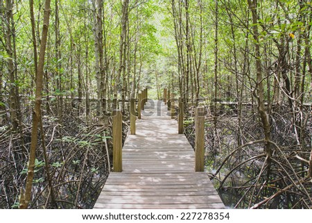 The forest mangrove at Chanthaburi, Thailand. - stock photo