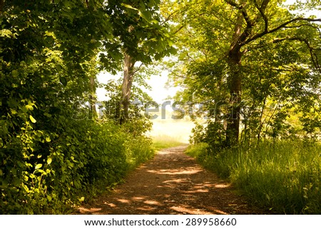 the forest path to Napoleonstein Jena - stock photo