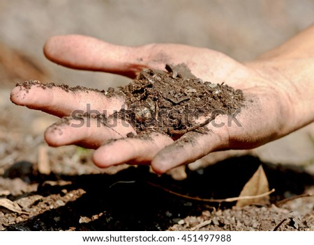 The forest soil on the hand with humus and nutrient for the plants.