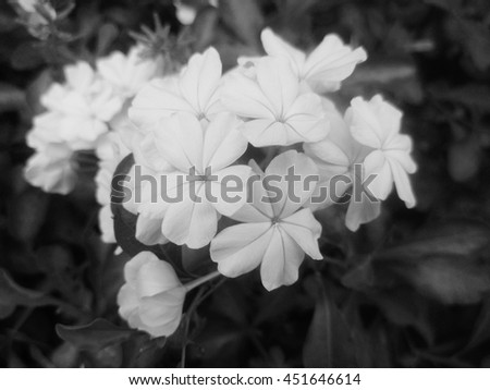 the forget me not flowers in vintages - stock photo