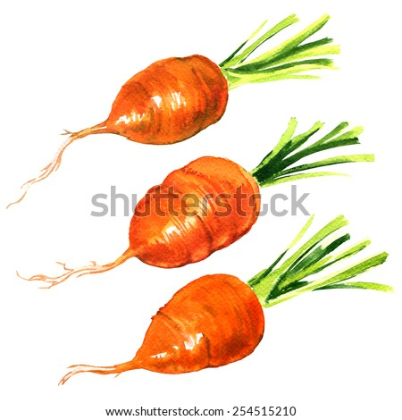 The fresh baby carrot on white background - stock photo