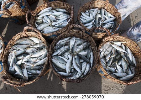 The fresh fishs are displayed for sale - stock photo