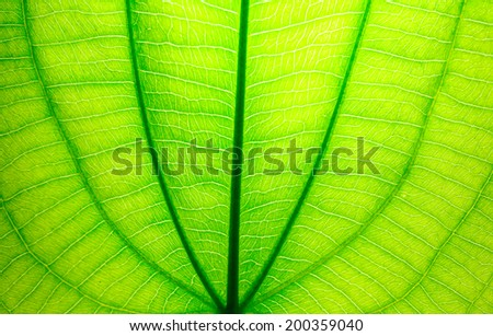 The fresh green leaf texture - stock photo