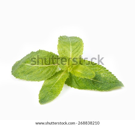 the fresh mint isolated on the white