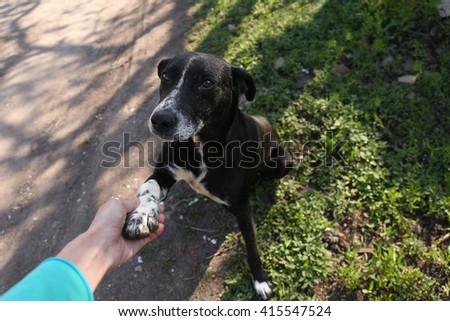 The friendly homeless dog gives paw - stock photo