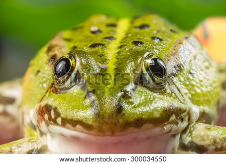 The Frog Sits Under  - stock photo