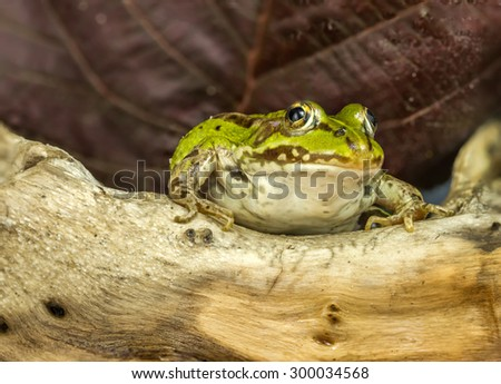 The frog sits under a brown sheet - stock photo