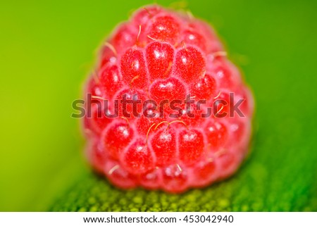 the fruit of raspberry