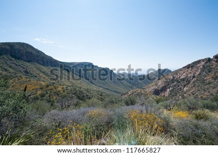 The Garden along Chisos Basin Trail