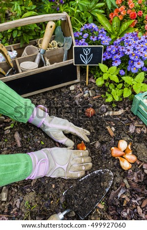 The gardener planted bulbs of flowers to the ground. Work in the garden.