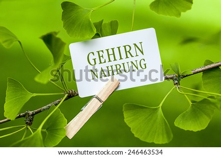 The German Word 'Gehirnnahrung', translation: brain food  in a Ginkgo Tree - stock photo