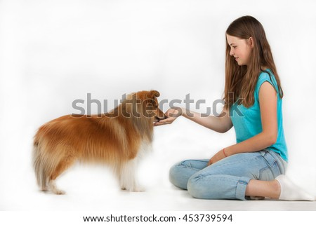The girl in blue shirt feeds the Shetland Sheepdog with the palm of her hand. Girl and Shetland Sheepdog on white background. - stock photo