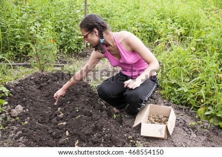 The girl is engaged in planting potatoes in the garden