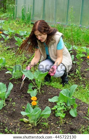 The girl with the green thumb loose soil on a bed of cabbage on a country site. Leningrad oblast.