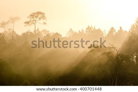 The golden light of sunrise through the mist, silhouette - stock photo