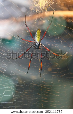 The golden silk orb-weavers genus Nephila, also known as Ferris web spider are among the largest spiders in the world