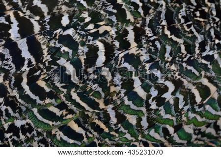 The grace camouflage green brown and black texture on Indian Peacock body feathers, the most beautiful bird feathers background - stock photo