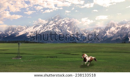The Grand Tetons serve as a splendid background to a galloping painted horse. - stock photo