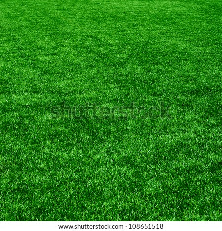The grass from golf field. Texture of green grass - stock photo