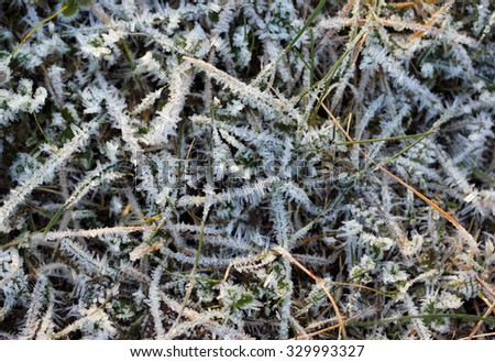 The grass layered with ice crystals in winter time