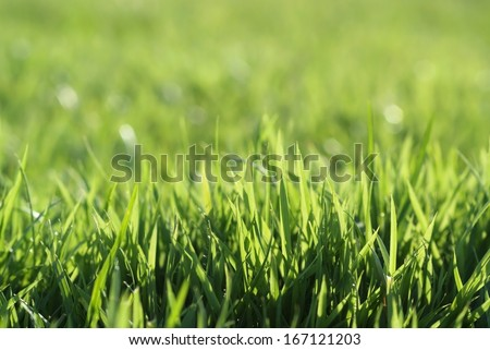 The grass on the golf course