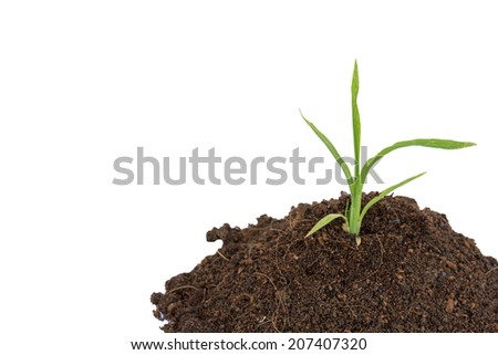 The grass on the ground, white background.