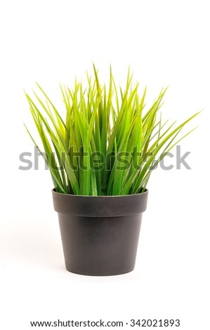 The grass tree pot in isolated.
