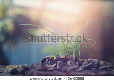 The grass under beautiful evening light,Soft focus,Blurred background and Vintage Style - stock photo