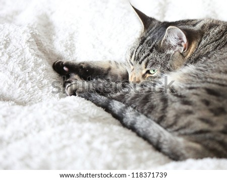 The gray cat relaxes and dreams on a white bed