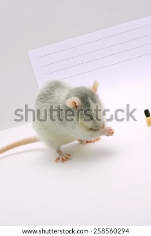 The gray rat washes against a sheet of paper