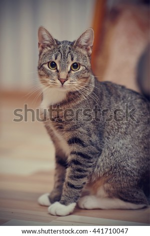 The gray striped cat with white paws and yellow eyes sits on a floor.