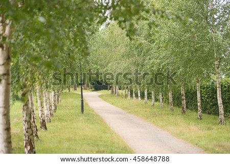 The green birch alley in the park