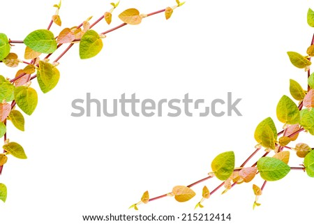 the green creeper plant  frame isolated on white background - stock photo