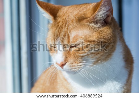 The green-eyed red cat