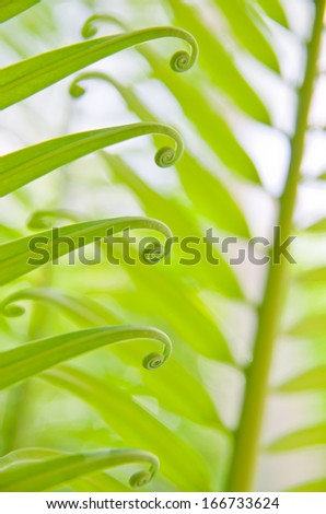 the green fern origin to in the nature - stock photo