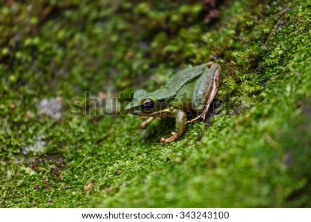 the green frog. During capturing the image of waterfall, i was saw the green frog at the green grass. It was sitting the without moving to anywhere. I quickly take my camera and snap the frog. - stock photo