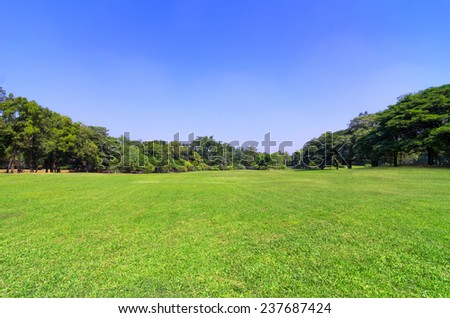 The green grass in the park empty. Sunny. - stock photo