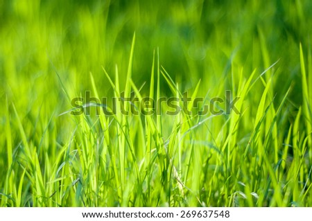 the green grass (Shallow Dof) - stock photo