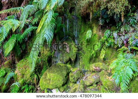 The green mossy wall with rocks streams with water. Haast, West Coast, New Zealand,