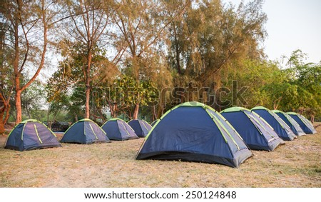 The green pine forest with tents before sunset - stock photo