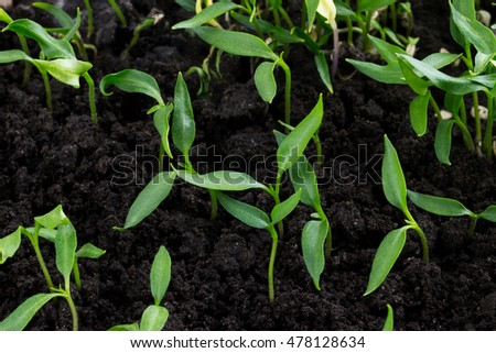 the green plant is growing in black soil