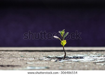 The green sprout of a plant makes the way through asphalt - stock photo