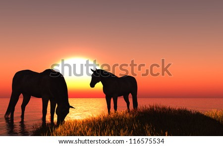 The group of horses at sunset.