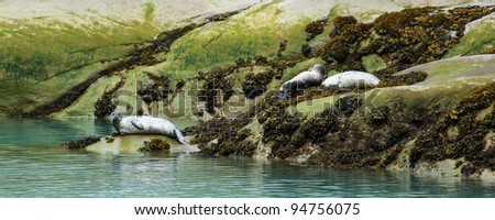 The group of sea lions is on rocks near water in Alaska, the USA - stock photo