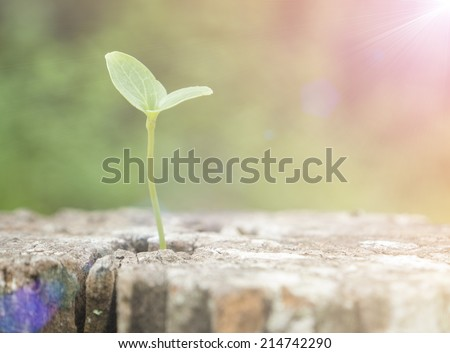 The growth of tree species on the timber. - stock photo