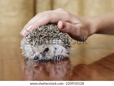 The hand irons a little hedgehog - stock photo